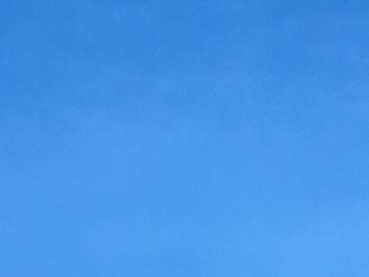 Image: Universal Covid Blue, courtesy Hadrian Pigott